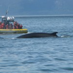 Whale watching - Trip to Quebec